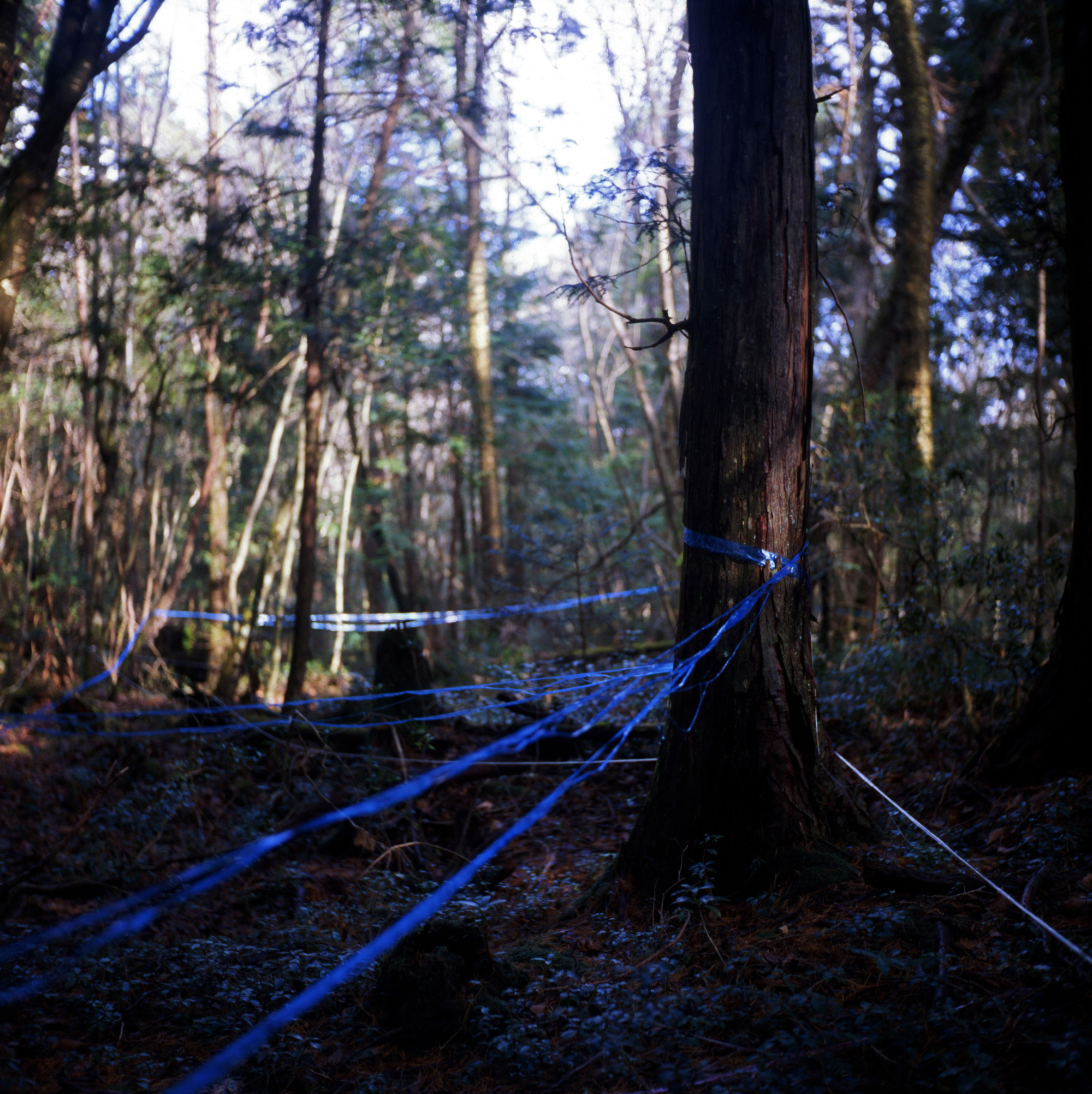 Signs of life and death: Tape left following sweeps of the forest. | ROB GILHOOLY