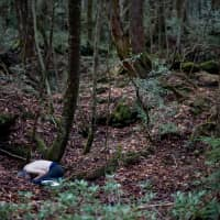 Last resting place: An unidentified man lies dead from an apparent overdose in the Aokigahara Jukai forest. | ROB GILHOOLY