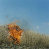 Burning bright: Untitled, from the 'Ametsuchi' series (2012). | © RINKO KAWAUCHI