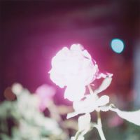 Untitled, from the 'Illuminance' series (2007). | © RINKO KAWAUCHI
