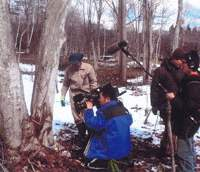 Forester Mr. Matsuki and television crew at an uri hada kaede maple -- about to be tapped for sap.   PHOTOS BY C.W. NICOL / AFAN WOODLAND TRUST