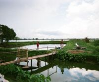 Life support: Hugely productive fish ponds in the threatened East Kolkata Wetlands, with the encoraching city on the horizon | STEPHEN HESSE PHOTOS