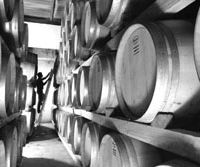 The cellars of Argentine winemaker Trivento, whose Malbec 2005 won a gold medal at the Japan Wine Challenge