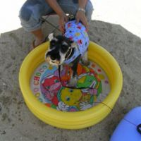 Dog days: Uncle in the pool. | AMY CHAVEZ