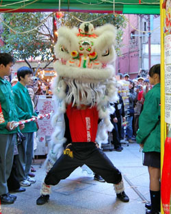 Carrying on tradition: A member of lion dance team performs the lion dance at a Yokohama Chinatown shop to bring it good luck and fortune. | NATSUKO FUKUE PHOTO