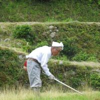 Old ways: A 90-year-old rice farmer in the Mie Prefecture hills works the same small paddies his ancestors did. But how long can that lifestyle survive?