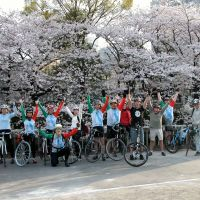 Members of the Half-Fast cycling club enjoy the cherry blossoms during one of their cycling tours in Tokyo this spring. | COURTESY OF HALF-FAST CYCLING CLUB