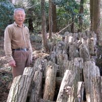 Level-headed: Ogisu, Tochigi Prefecture, organic farmer Shigeru Komori no longer raises mushrooms or uses leaf litter as fertilizer on his paddies. | WINIFRED BIRD