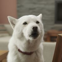 In the dog house: Many of the Shirato Family ads are shot around the family home.