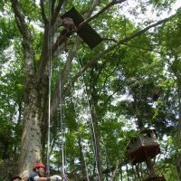 Rope work: Participants in a tree-house workshop learn how to climb really tall trees at Mount Takao. | SATOKO KAWASAKI