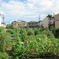 Field of dreams: This  Tokyo community garden has 81 plots, each measuring 10 sq. meters (about six tatami mats). | MICHAEL HASSETT