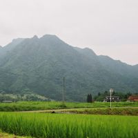 Green fields: A typical Izu landscape in July with paddies full of ripening rice.