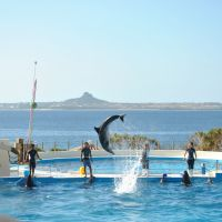 Watching the dolphins at Churaumi Aquarium in Okinawa was a just a hint of what we'd see later on the open waters. | AMY CHAVEZ