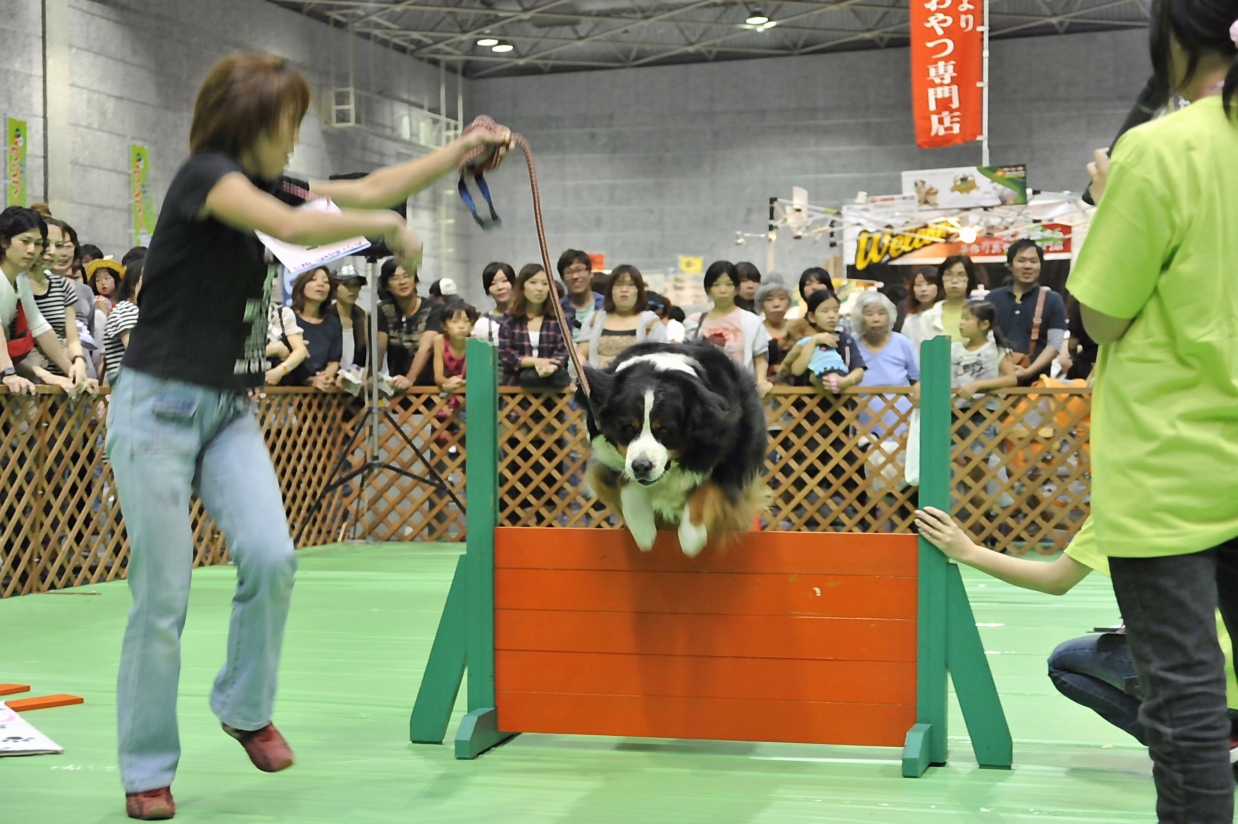 Furry friends: Pets take center stage at the Pet Haku industry fair. | © PET HAKU 2011