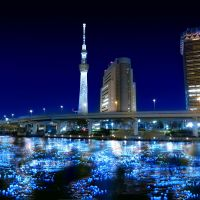 Sumida River to light up with LED fireflies
