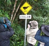 A sign warns motorists about the Okinawa rail