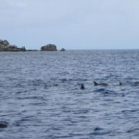 A group of spinner dolphins spotted during a motorboat tour to Minamijima island.