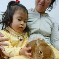 What's up doc? A girl pets a rabbit at Usagi Cafe in Naka Ward, Yokohama, on Dec. 11. | KYODO PHOTO
