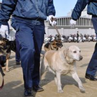 Power of persevering: Labrador retriever Kinako takes part in a ceremony marking her debut as a police dog at a police academy in Takamatsu, Kagawa Prefecture, on Thursday. | KYODO PHOTO