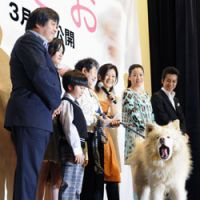 Akita dog Wasao yawns during a ceremony in which he was appointed as a special ambassador for World Heritage-related activites. | KYODO PHOTO
