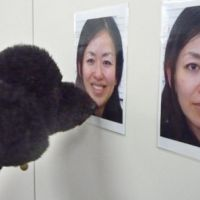 The biscuit please: A poodle presses its nose against the photo of a smiling woman during a survey carried out by animal experts at Azabu University of Sagamihara, Kanagawa Prefecture.   COURTESY OF AZABU UNIVERSITY/ KYODO PHOTO