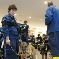 German help: Rescue team members from Germany wait with their dogs for a bus to travel to Sendai on Sunday after arriving at Narita airport.   KYODO PHOTO