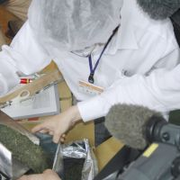 What the leaves say: A Shizuoka prefectural official checks a sample of Shizuoka-grown tea leaves for radioactive materials at a factory in the city of Shizuoka on June 10. | KYODO