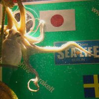 On the ball: An octopus in Hanover picks Japan over Sweden in the semifinals of the Women's World Cup on July 13. | KYODO