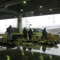 Up from the depths: Fish dealers check out the catches at Kesennuma port in Miyagi Prefecture on Feb. 23. | SETSUKO KAMIYA