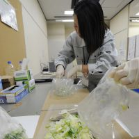 Confidence booster: Workers at a consumer safety center in the city of Fukushima prepare to conduct radiation checks March 5 on vegetables brought in by residents. | KYODO