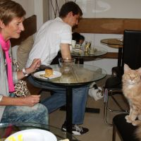 Purr snatchers: Customers play with cats at a newly opened cat cafe in Vienna on Friday. | KYODO