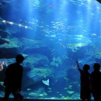 Any bluegill?: The Sumida Aquarium, part of the new commercial complex surrounding Tokyo Sky Tree in Sumida Ward, opens for press preview Thursday. | SATOKO KAWASAKI