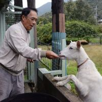 The real Dr. Doolittle: Seiji Taniguchi feeds a goat at Sankyu Bokujo (Thank You Farm) for abandoned animals in Sanda, Hyogo Prefecture, last month. | KYODO