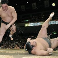 Eyes on the prize: Harumafuji throws Toyonoshima to the ground at the Autumn Grand Sumo Tournament on Monday. | KYODO