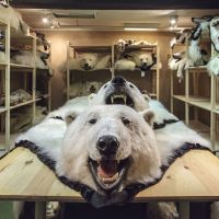 Prized trophy:  The polar bear trade is dividing nations. | THE WASHINGTON POST