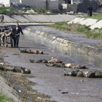 Massacres continue: Men gather the corpses of at least 65 people fished out of a river in the contested Bustan al-Qasr neighborhood of Aleppo, Syria, on Tuesday. | AP