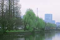 Babylon weeping willows lend their wistful grace to the banks of the Kikyo-bori Moat (above), while open spaces now reign supreme in the East Garden (below), once the heart of the Tokugawa Shogunate.