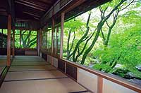 The restful outlook from the temple's hondo (inner sanctuary)