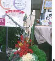 Traditional new-year pine-and-bamboo kadomatsu now often also include ha-totan decorative kale (above), and dwarf nanten sacred bamboo (below).