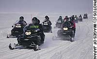 A phalanx of snowmobiles (above) roar through the national park, whose whildlife, including bison, and natural winter serenity are now both being put under even greater threat.