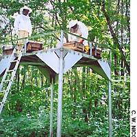 Beekeeper Kunio Shimada (left) oversees the siting of hives on the bear-proof platform in the Kurohime woods.