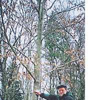 The author, nata not menacingly in hand, by a beech he planted 20 years ago in what is now the C.W. Nicol Afan Woodland Trust in Kurohime, Nagano Prefecture.