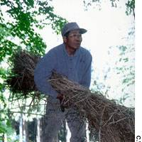 Mr. Matsuki hard at work last month rethatching the roof of our charcoal kiln. After poachers purloined the orchids in our woods, he berated me for being so proud of them that I couldn't help but show them off. The problem is that the thieves are local, and they wait until we are away.