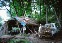 Mr. Matsuki and helpers at work recently rethatching the roof over the charcoal kiln in our Kurohime woods.