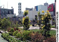Nature may often seem as far removed to Tokyo residents as Mount Fuji looming from 110km away over the Shinjuku district, but in small ways such as this roof garden atop one of those skyscrapers, it is creeping back as awareness of its loss slowly grows.