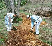 Laying woodchips to make a sweet-smelling and 'green' path for visitors to our woods in Kurohime, Nagano Prefecture.