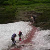Hikers cross 'watermelon snow' in Hokkaido, caused by the presence of an algae rich in carotenoid pigment.   PHOTOS (C) IMAGES OF JAPAN