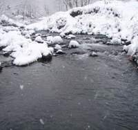 AS THE WINTER solstice approaches, this stream on the Shiretoko Peninsula in northern Hokkaido (above) becomes one of countless in the northern hemisphere to which salmon that were hatched and grew there for many years return from the ocean as magnificent specimens, genetically destined to spawn and then die. | PHOTOS (C) IMAGES OF JAPA