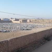 Meals square:  The compound at Khichan where villagers put out grain for the cranes.