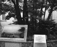 The old camphor tree now outside Yokohama Archives of History. The same tree is shown in the picture of Perry's 'Great Landing' in 1854.
